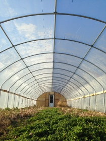 Our hoop house